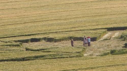 Vivez des initiations uniques dans les Crop Circles