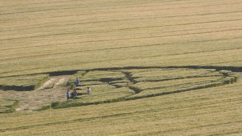 Meditation dans un crop circle