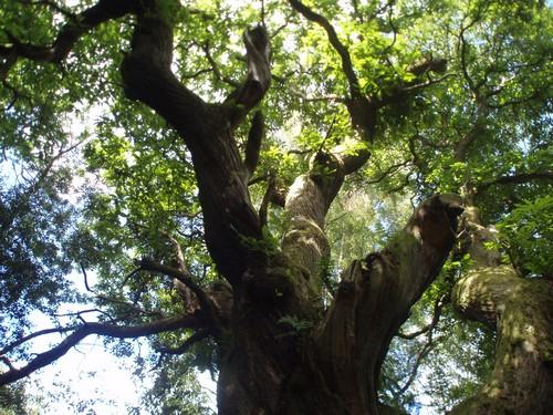 Géobiologie et qi gong des arbres