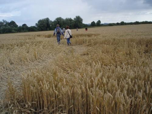Crop circle en Angleterre