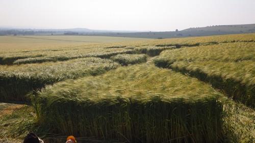 Voyage initiatique crop circles