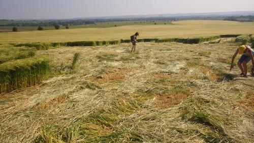 extra terrestre et crop circle